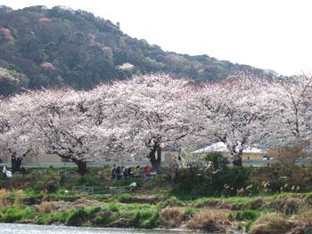 hanami-3.jpg