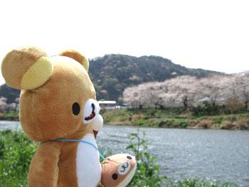 hanami-rila1.jpg
