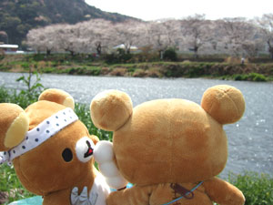 hanami-rila15.jpg