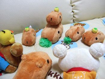 kapibara-san-s1.jpg